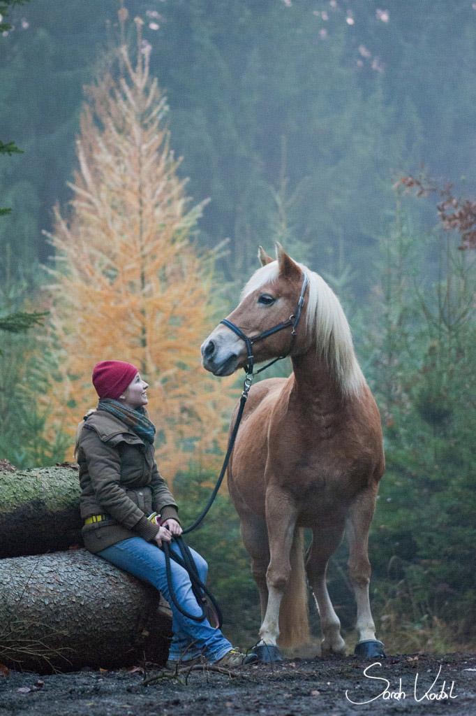 Sarah Koutnik Fotografie | Pferdefotografie | München | Haflinger im Herbst