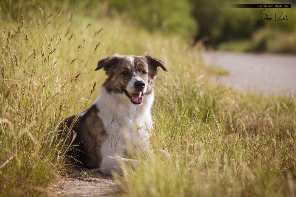 Sarah Koutnik Fotografie | Hundefotografie | München | Erinnerungen