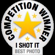 I Shot It - Horse Photo Competition