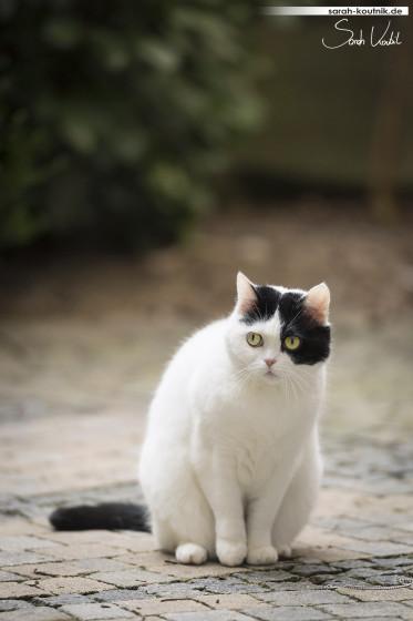 schwarz weiße Katze Mila bewacht die Tür | Katzenfotografie München