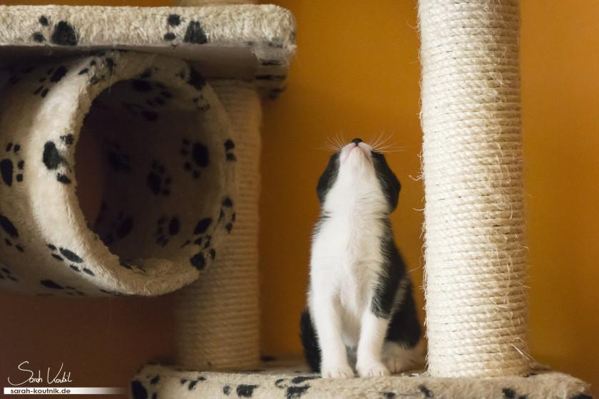 Kätzchen beim Fotoshooting | Katzenfotografie München