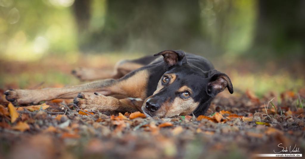 Mischling Jesko im Herbstlaub | Hundefotografie München | Wann fotografierst du am Liebsten?