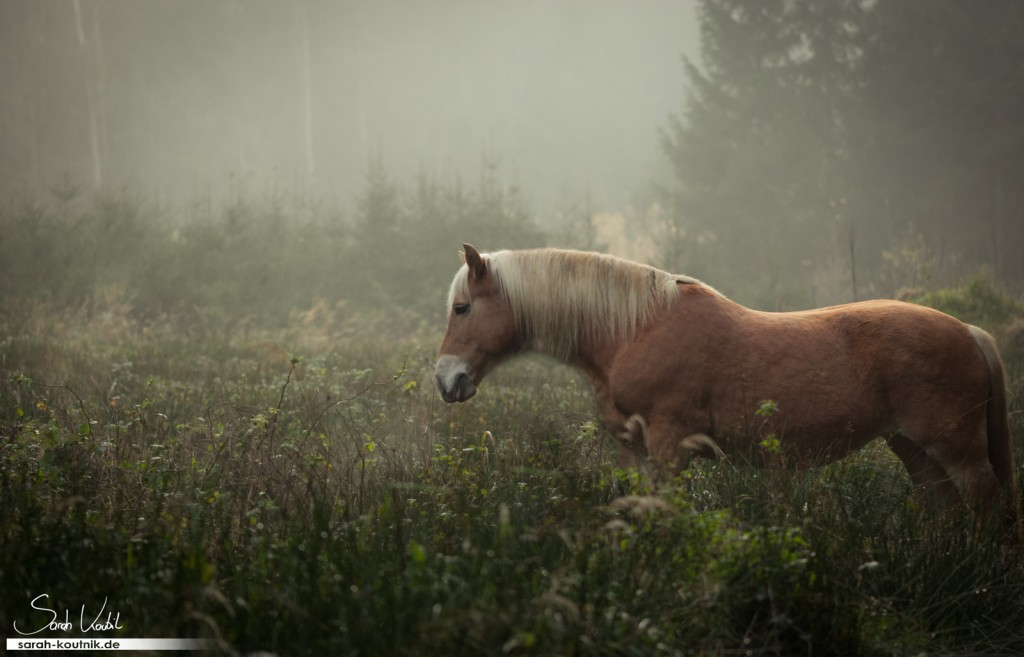 Fotoshooting mit Pferd im Herbst bei Nebel | Sarah Koutnik Fotografie | Pferdefotografie München