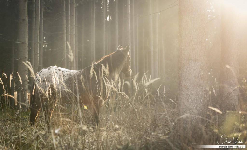 Träume und Prioritäten | Pferdefotografie München | Sarah Koutnik Fotografie
