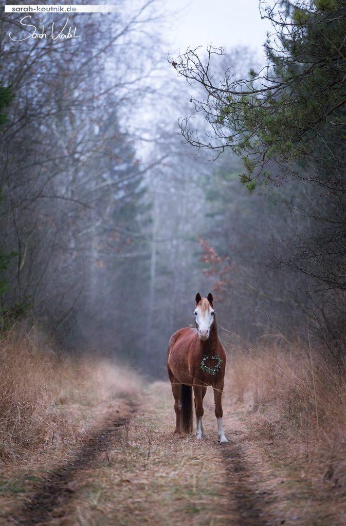 Sarah Koutnik Fotografie | Welsh A Ghost | Pferdefotografie | München | 2016