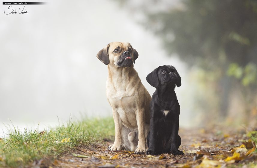 Puggle Penny und Lesehund Cooper | Hundefotoshooting Winter | Portrait | Hundefotografie München