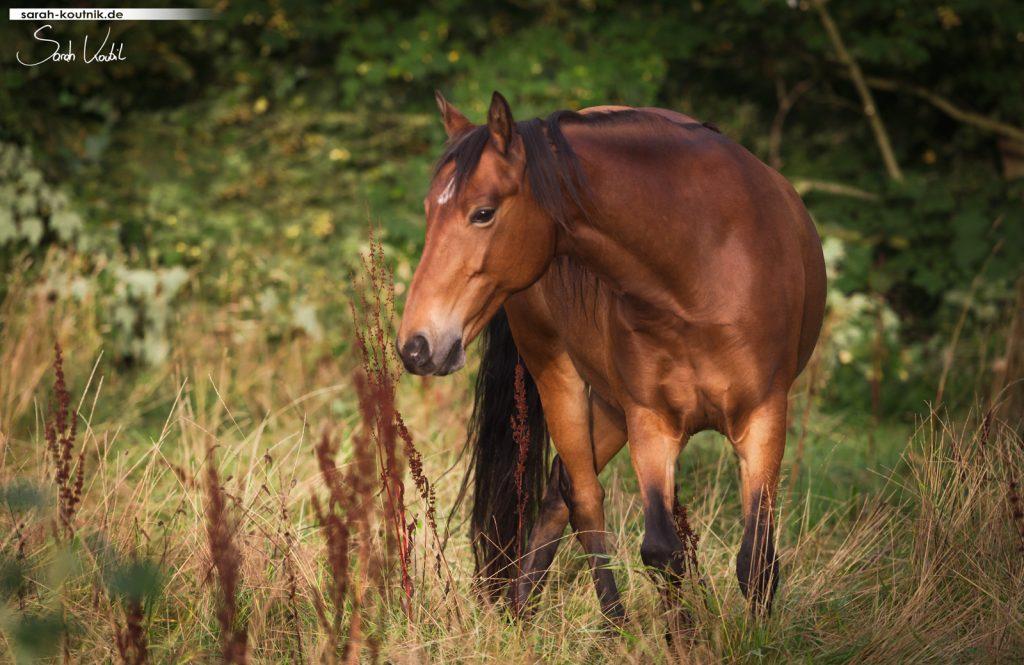 Ponystute Libelle | Sarah Koutnik Fotografie | Pferdefotografie München | Flensburg