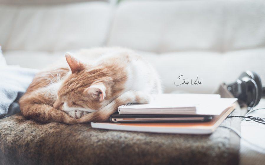 roter Hauskater Lauser | Katzenfotografie | München | Sarah Koutnik Fotografie
