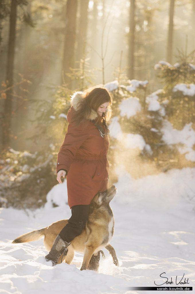 Malinois Hexe im Schnee | Hundefotografie München | Sarah Koutnik Fotografie | Jahresrückblick 2017