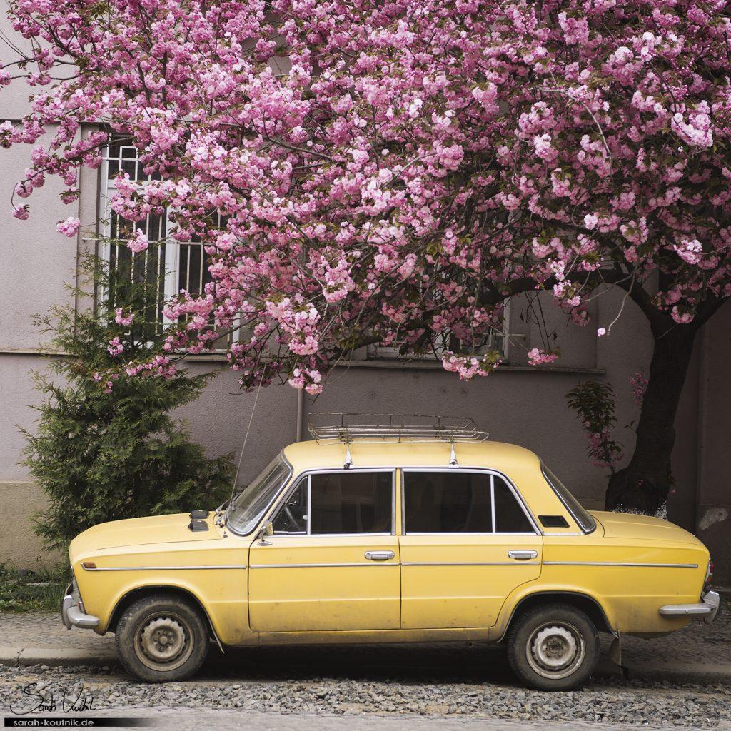 Kirschblüten in Uzhorod | gelber Lada | Sarah Koutnik Fotografie | Jahresrückblick 2017