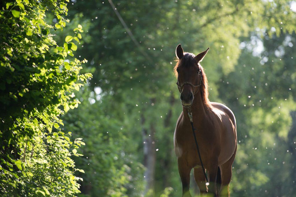 Sarah Koutnik Fotografie | Pferdefotografie München | Tipps und Tricks | Workflow Sommerschnee | das Bild davor