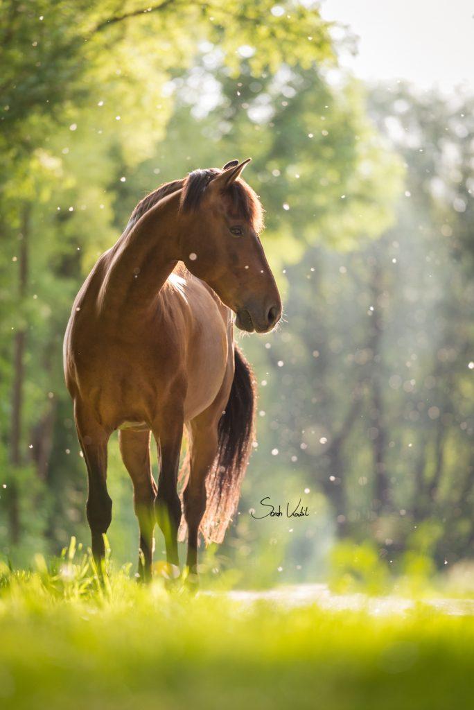 Sarah Koutnik Fotografie | Pferdefotografie München | Tipps und Tricks | Workflow Sommerschnee | das fertige Foto