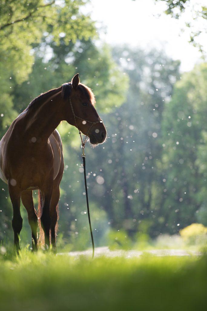 Sarah Koutnik Fotografie | Pferdefotografie München | Tipps und Tricks | Workflow Sommerschnee | das Bild danach