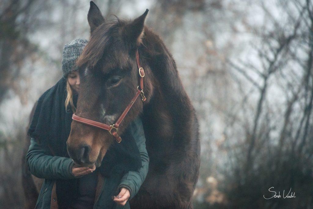 Irish Sport Horse Abbey Wood | Sarah Koutnik Fotografie | Pferdefotografie | München | Bayern | Österreich | Nebel