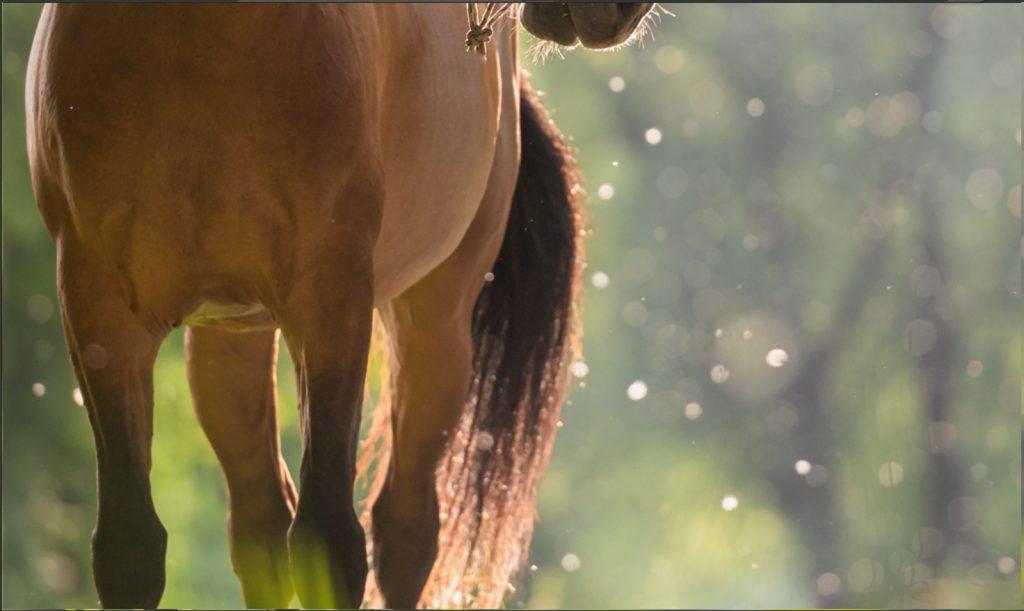 Sarah Koutnik Fotografie | Pferdefotografie München | Tipps und Tricks | Workflow Sommerschnee | feine Retusche des Stricks