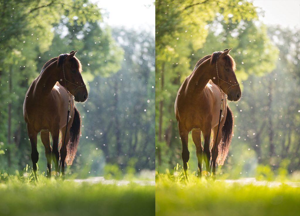 Sarah Koutnik Fotografie | Pferdefotografie München | Tipps und Tricks | Workflow Sommerschnee | Vergleich Vorher nach Lightroom Bearbeitung
