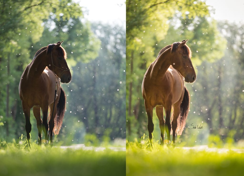 Sarah Koutnik Fotografie | Pferdefotografie München | Tipps und Tricks | Workflow Sommerschnee | Vergleich Vorher Final