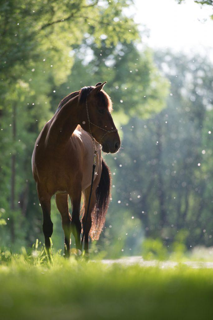 Sarah Koutnik Fotografie | Pferdefotografie München | Tipps und Tricks | Workflow Sommerschnee | das vorher Foto