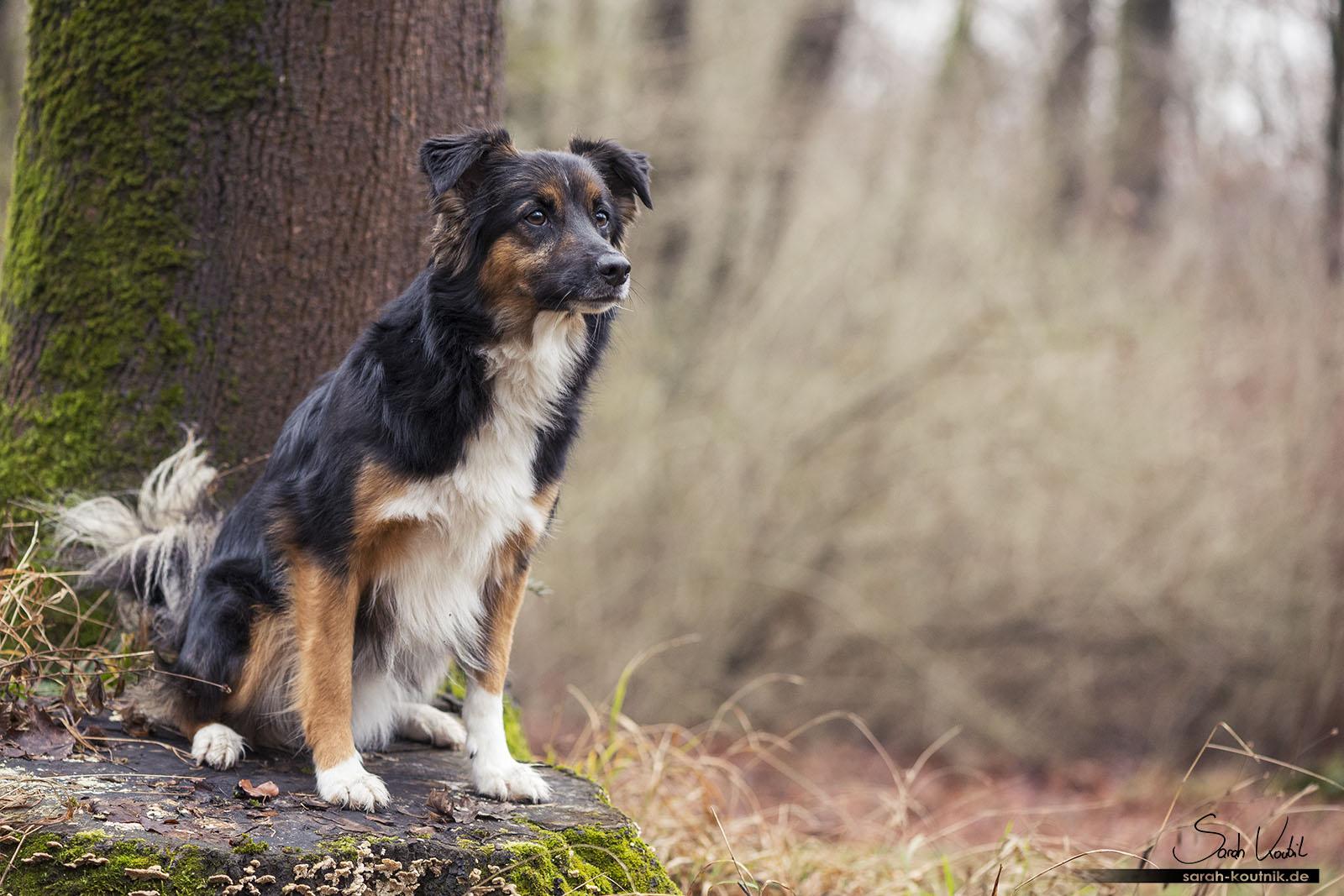 Hundefotoshooting mit Mischling Strolch | Hundefotografie München