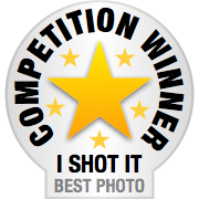 I Shot It - Horse Photo Competition