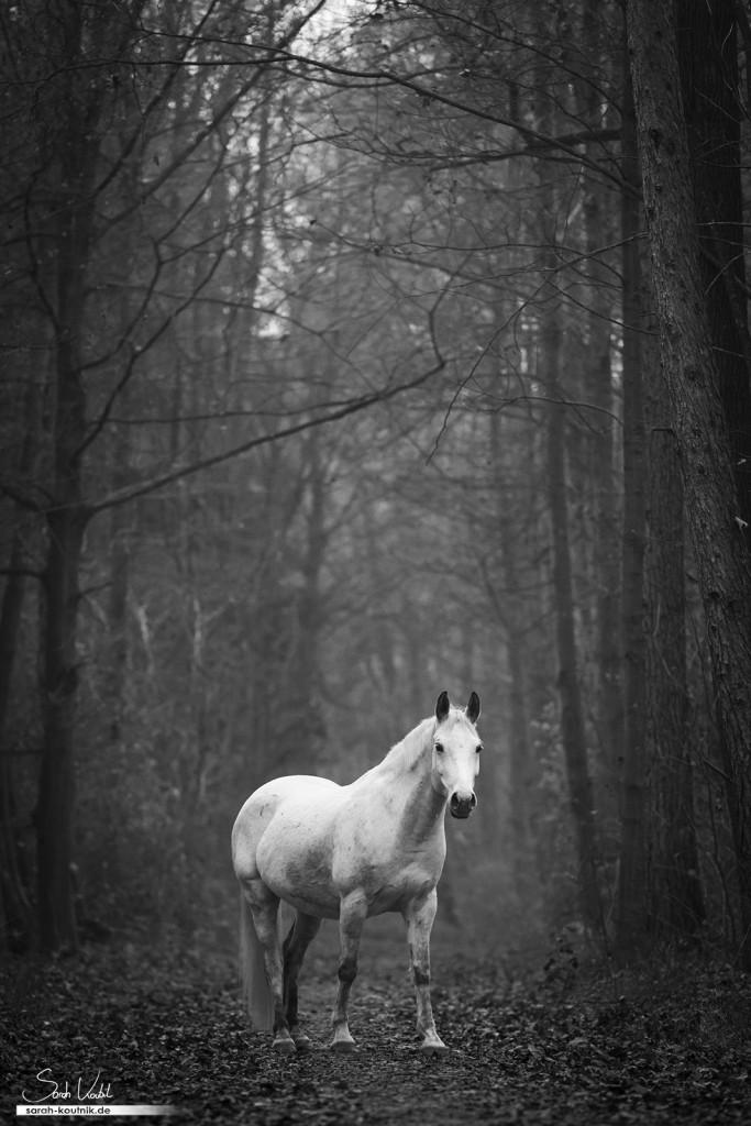 Schimmel Finn beim Pferdefotoshooting im Wald mit Nebel | Pferdefotografie München | Einfach bessere Fotos machen
