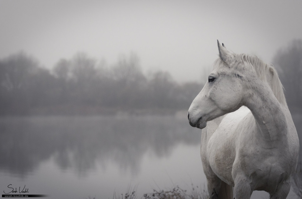 Emotionen einfangen | Schimmel Finn beim Pferdefotoshooting im Nebel | Pferdefotografie München