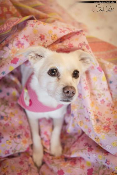 Mischlingshündin | Homeshooting mit Hund | Hundefotografie München