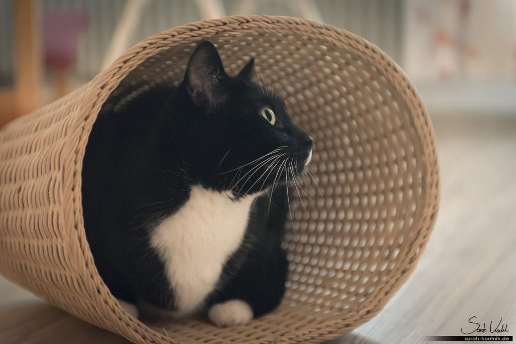 schwarz weiße Hauskatze Lucy im Weidekorb | Katzenfotografie München