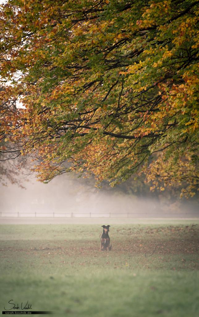 Mischlingsrüde Jesko im Morgennebel, Gegenlicht der aufgehenden Sonne | Hundefotografie München