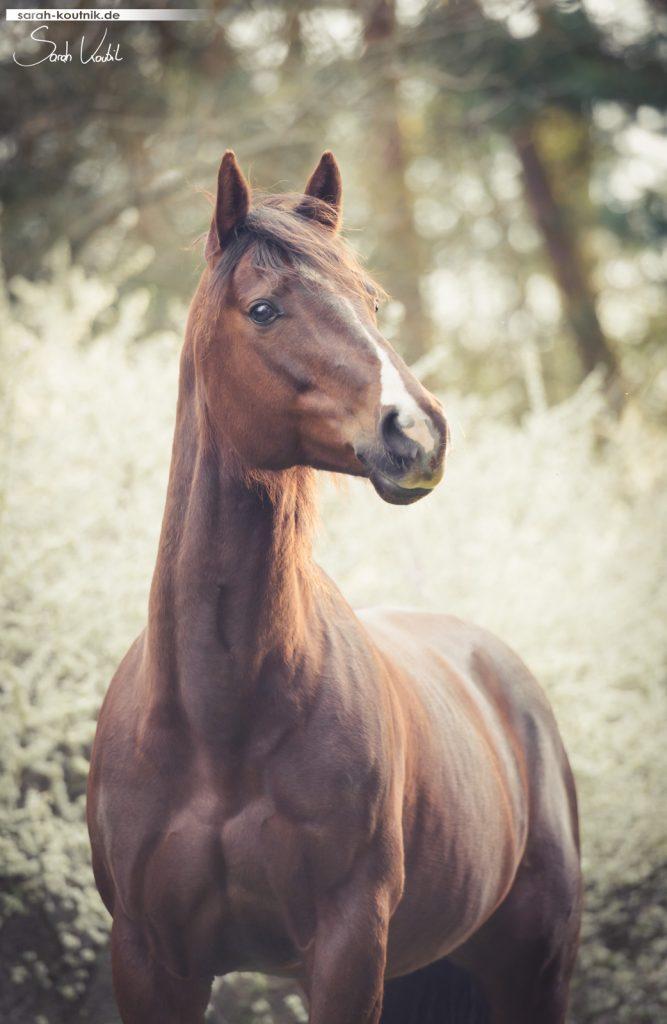 Pferdefotografie München | Dunkelfuchs Alice | Portrait Frühling