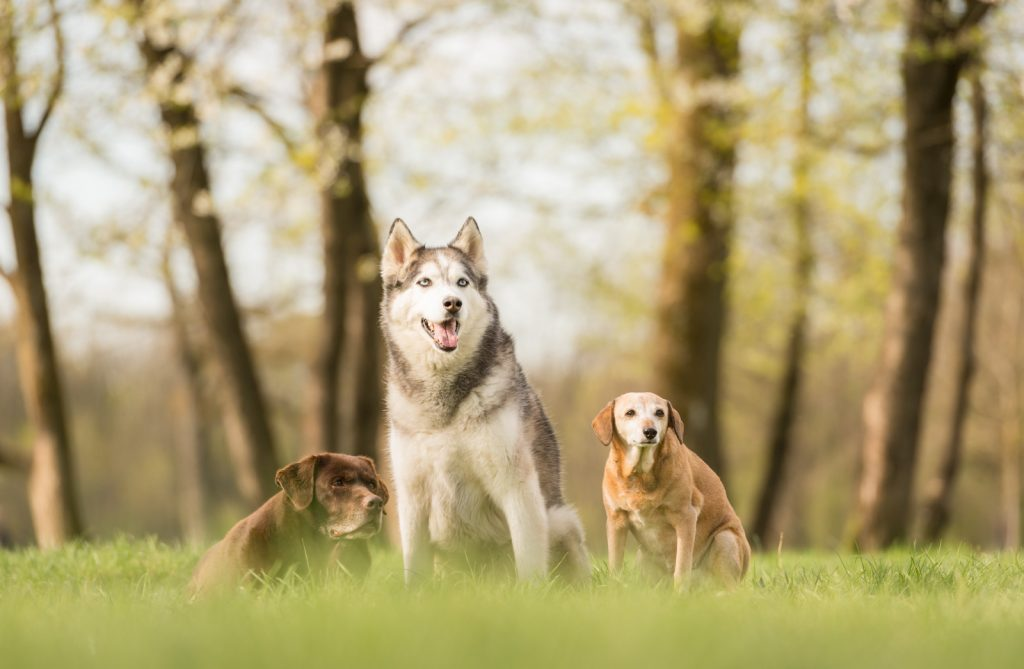 Rudelshooting Hundefotografie München im Frühling