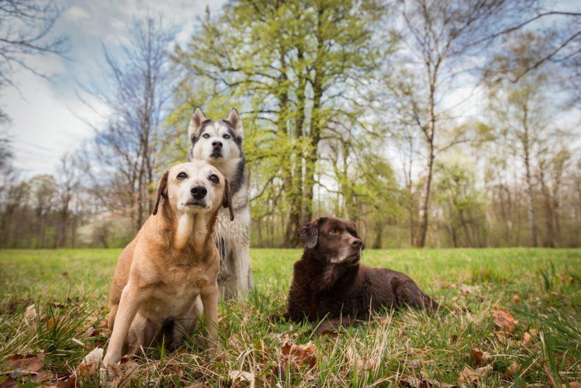 Hundefotografie München | Rudelshooting