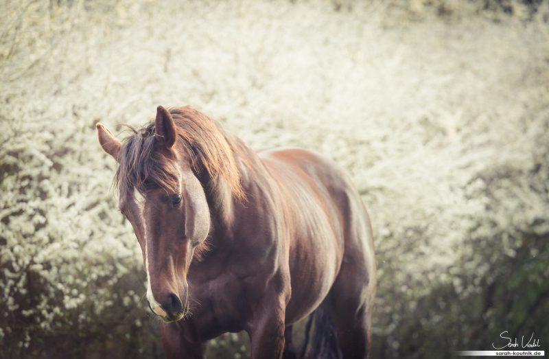 Der eigene Stil - Pferdefotoshooting mit Alice | Pferdefotografie München
