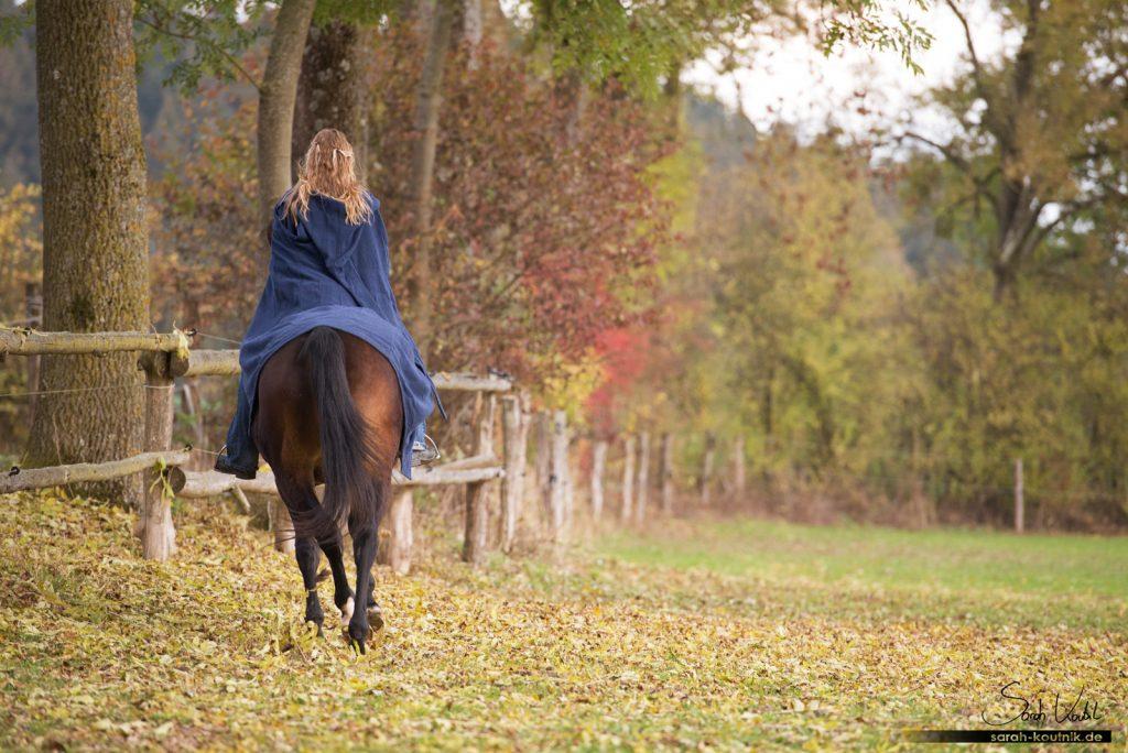 Herbstliches Shooting mit Marina und ihrer braunen Stute Conrose | Einfach bessere Fotos machen | Tiefe vermitteln | Zaun als Hilfsmittel