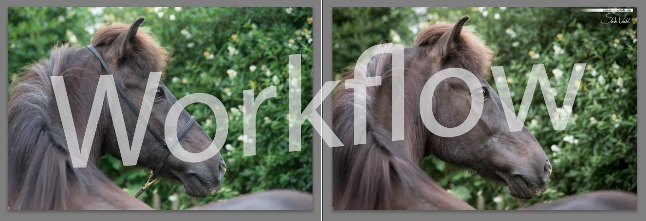 Workflow | Pferdefotografie | München