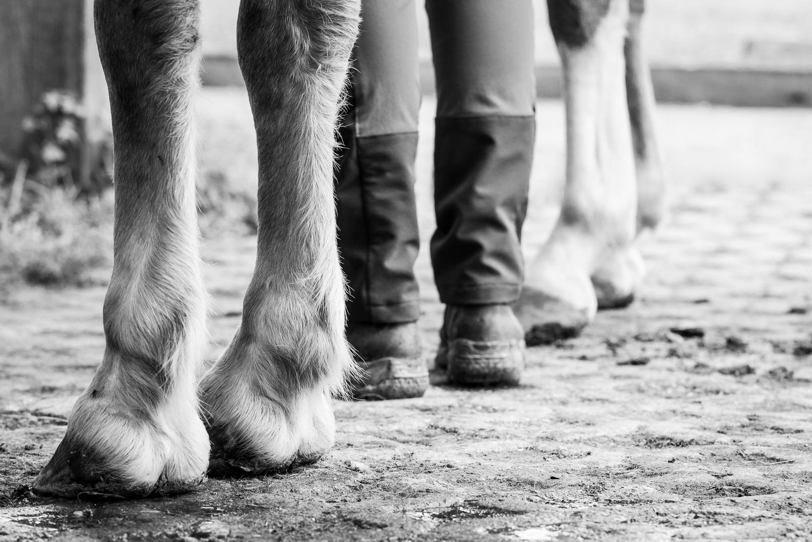 Schwarz weiß Foto | Füße und Hufe | dokumentarische Pferdefotografie | Sarah Koutnik Fotografie