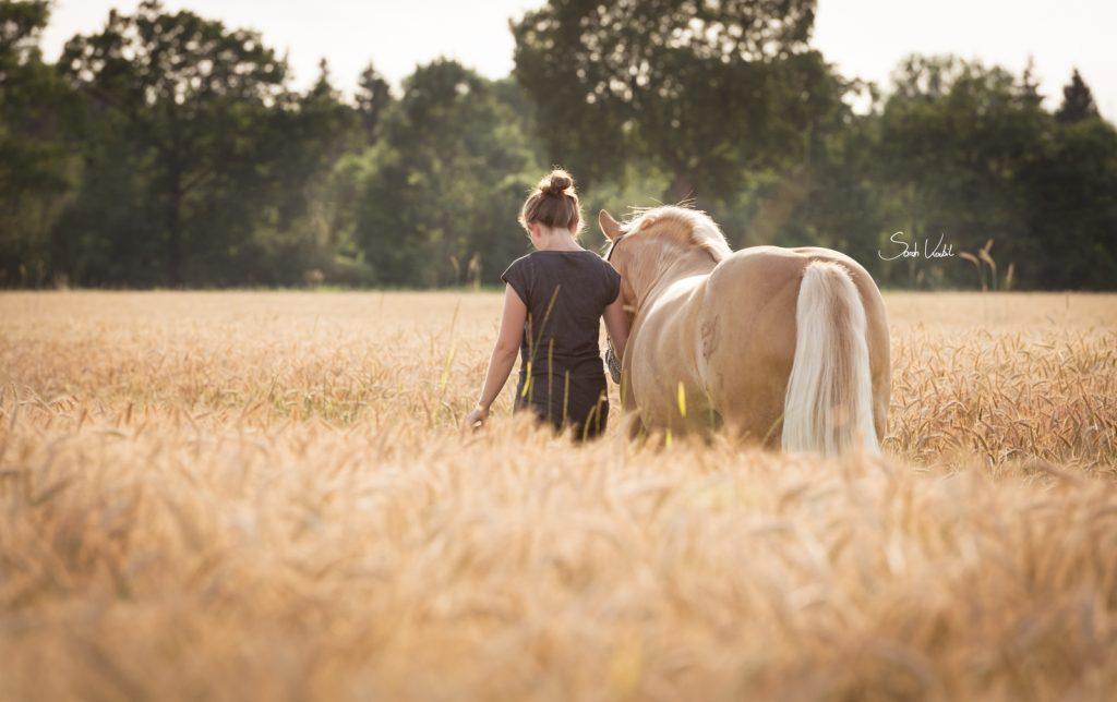 Haflingerwallach Samos | Weizenfeld | Therapiepferd | Pferdefotografie | Sarah Koutnik Fotografie | München