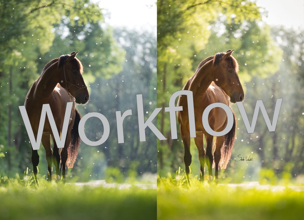Sarah Koutnik Fotografie | Pferdefotografie München | Tipps und Tricks | Workflow Sommerschnee | Workflow Beitragsbild