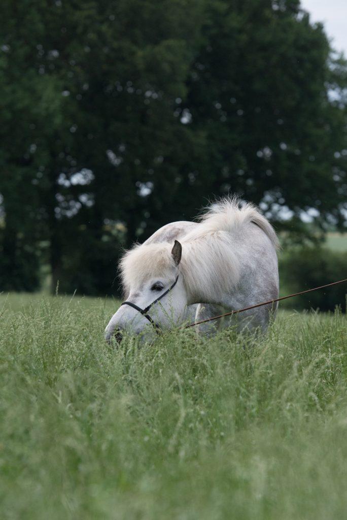 Hilfe, mein Tier benimmt sich nicht | Dekoration auffressen | Pferdefotografie | München | Sarah Koutnik Fotografie