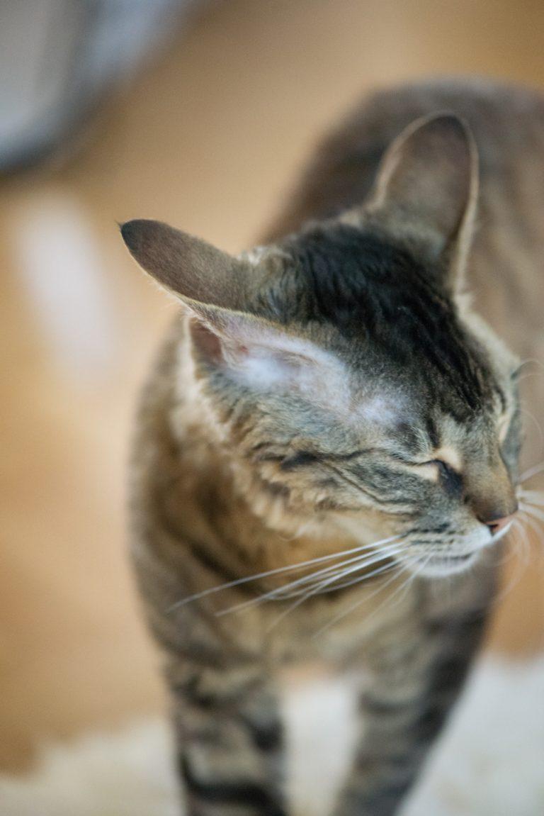 Hilfe, mein Tier benimmt sich nicht | keine Lust | Katzenfotografie | München | Sarah Koutnik Fotografie