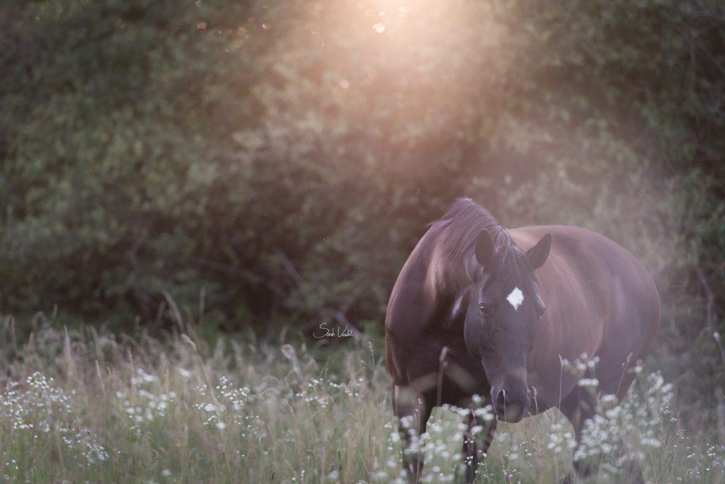 Highlight | Über den Neid | Pferdefotografie München | Gegenlicht | Sarah Koutnik Fotografie
