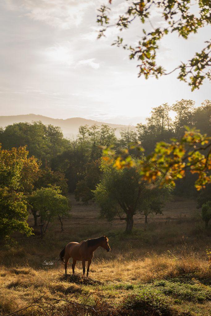 Pferd im Morgenlicht der Toskana | Pferdefotografie München | Sarah Koutnik Fotografie