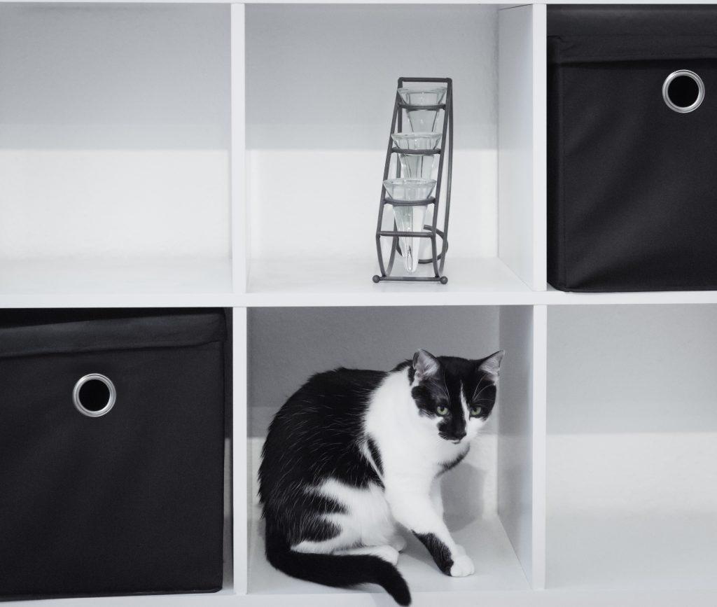 Katze Maya im Regal | Motive einrahmen | kostenloser Fotokurs | Einfach bessere Fotos machen | Sarah Koutnik Fotografie | Katzenfotografie München