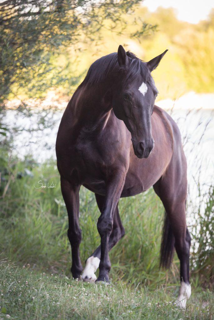 Stute Highlight in der Abendsonne | Pferdefotografie | München Starnberg | Sarah Koutnik Fotografie | Blogbeitrag gutes Foto