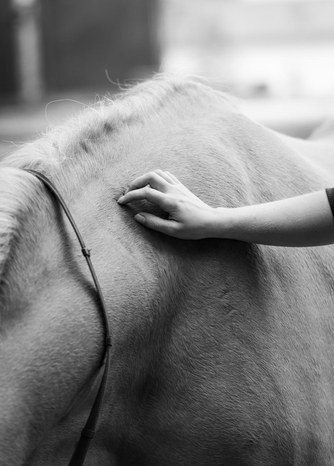 Emotionen einfangen | Schwarz weiß Foto | Pferd und Mensch Zuneigung | authentische Pferdefotografie | Sarah Koutnik Fotografie
