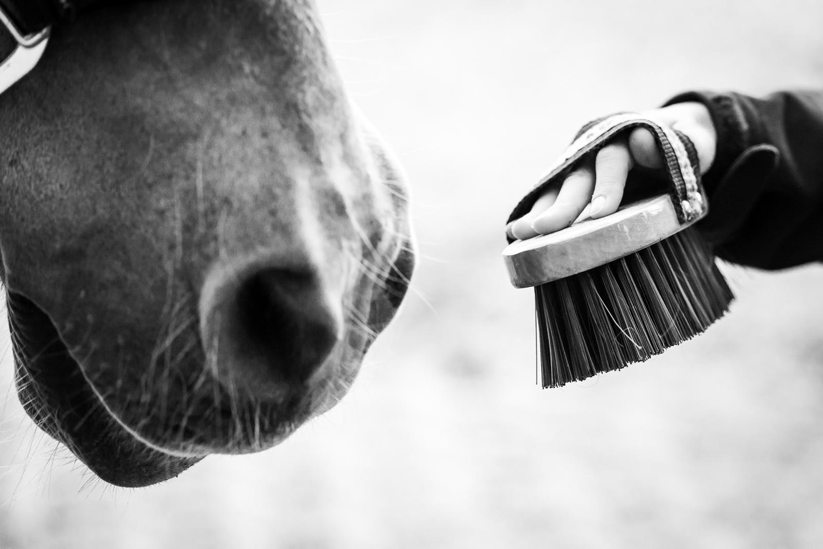 Kontakt | Hand mit Bürste und Nüstern Pferdenase | Sarah Koutnik Fotografie | Authentische Pferdefotografie Krailling München Bayern