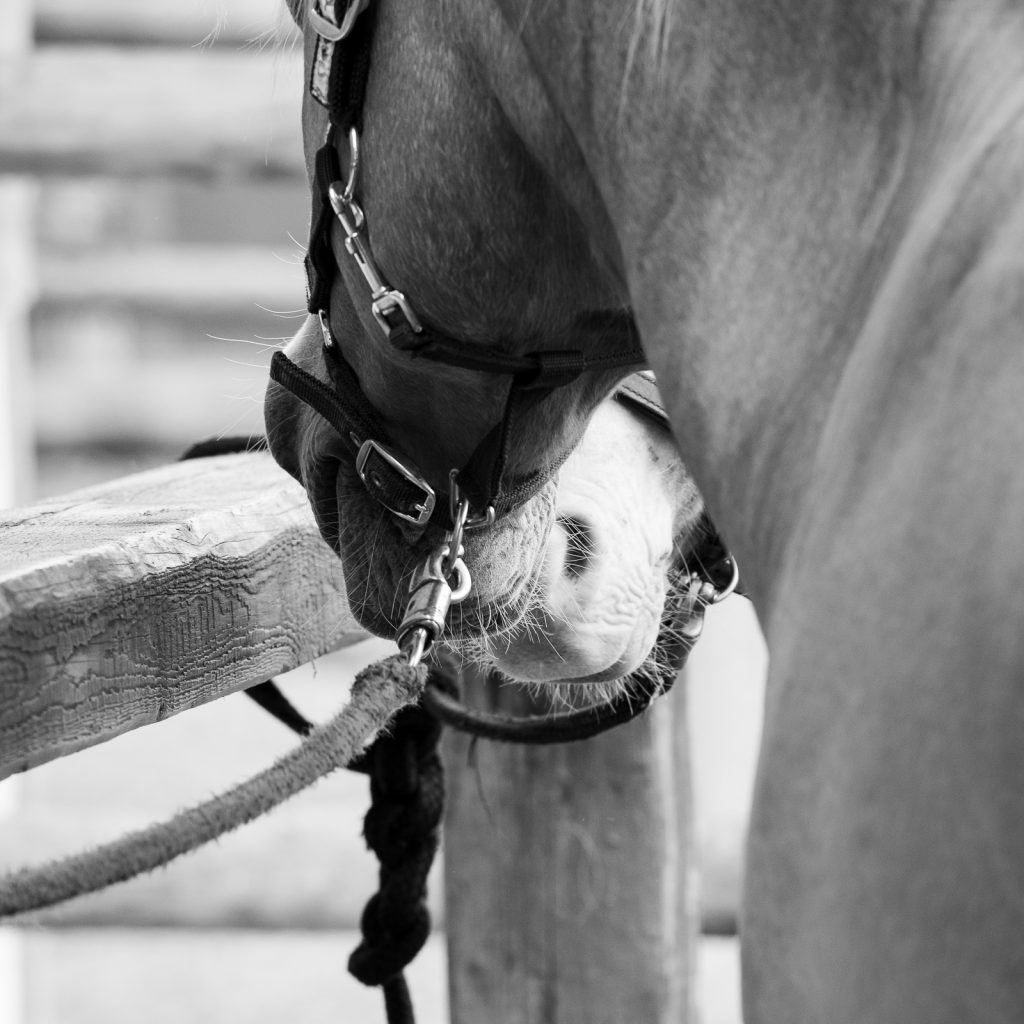 Neuanfang | Authentische Pferdefotografie | Sarah Koutnik Fotografie | München Bayern Krailling