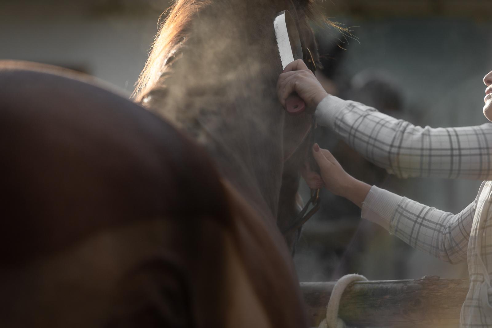 Authentische Pferdefotografie | Pferd putzen Gegenlicht Staub | Sarah Koutnik Fotografie | München Krailling | Portfolio