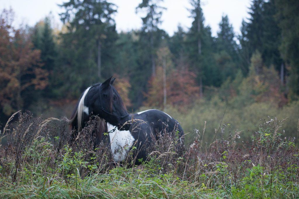 Workflow Pferdefotografie | Tinkerstute Rosy | Sarah Koutnik Fotografie | München Krailling Bayern | Datei danach