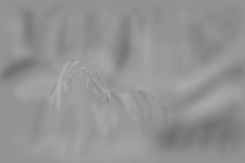 Workflow Pferdefotografie | Tinkerstute Rosy | Sarah Koutnik Fotografie | München Krailling Bayern | Dodge and Burn Ebene